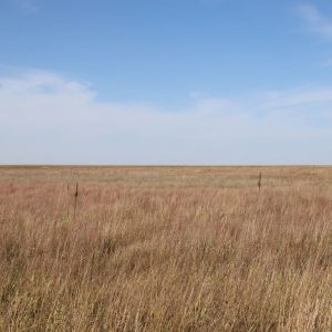 reck agri auction, online only, reck, marc, colorado land for sale