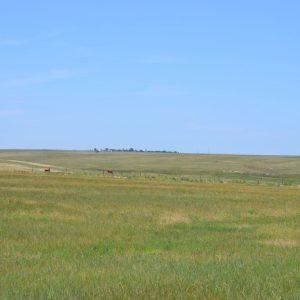 Logan County, CO CRP Land for Sale