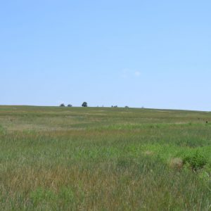 CRP Land in Colorado for Sale