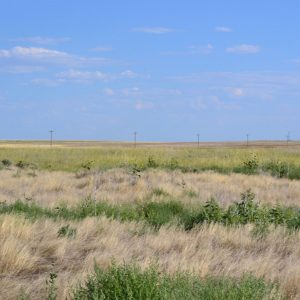 Weld County, CO CRP Land for Sale