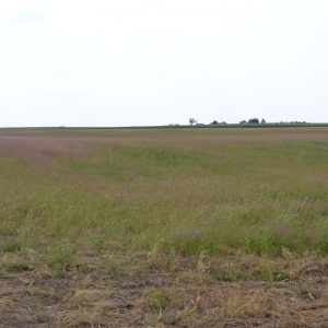 Nebraska Farm Land for Sale