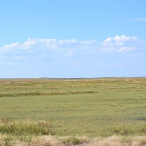 Colorado CRP Land for Sale