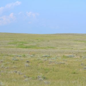 Nebraska CRP Land for Sale