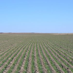 Nebraska Dry Farmland for Sale