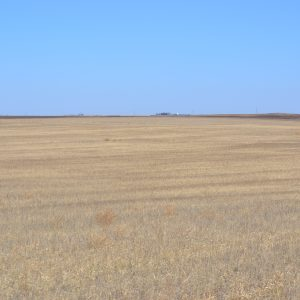 Excellent opportunity to purchase 318+/- dryland acres