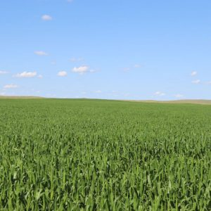 Colorado farmland for sale