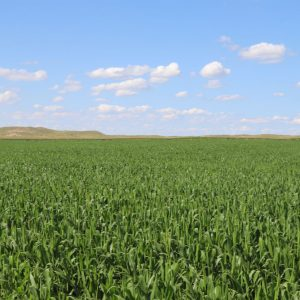 Irrigated land for sale