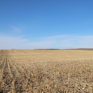 Parcel 4A north pivot corn stubble
