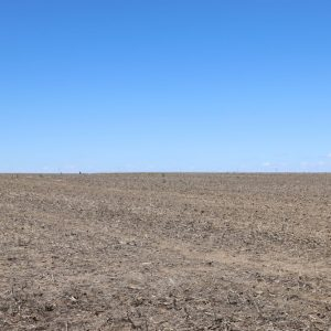 Young Dryland 161.1+/- ac dryland. L/L share of wht to Buyer(s)