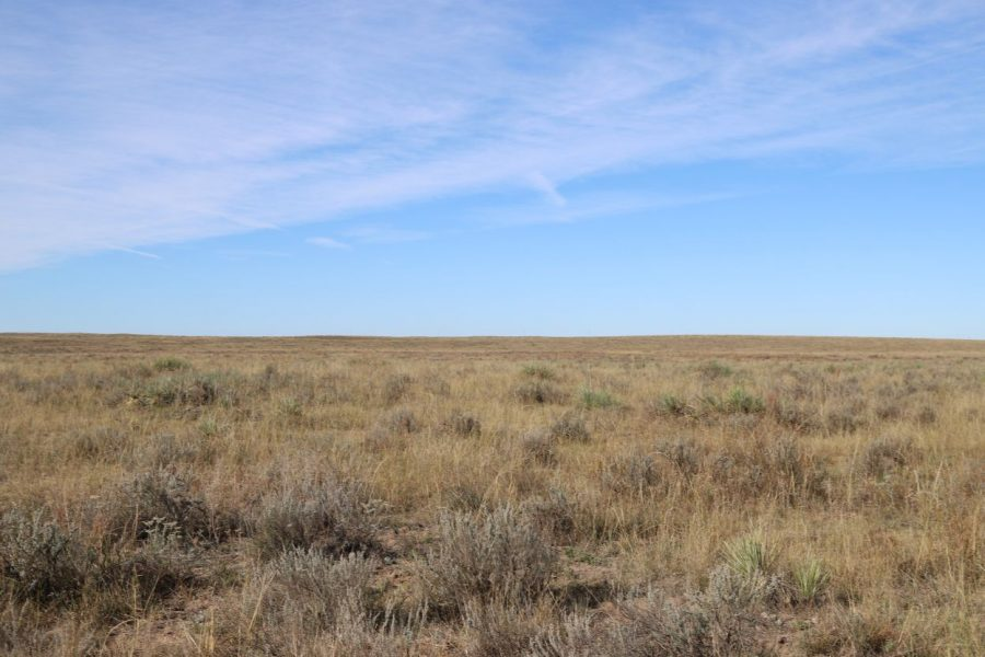 Colorado Pasture for sale