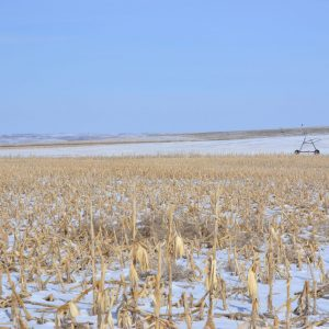 Bean stubble under pivot at time of listing