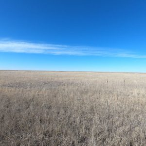 SE WASHINGTON COUNTY CRP LAND AUCTION