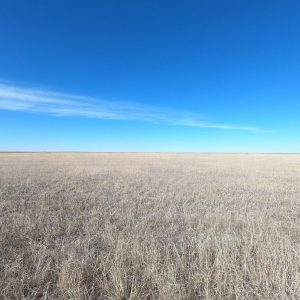 Washington, CO CRP Land Auction
