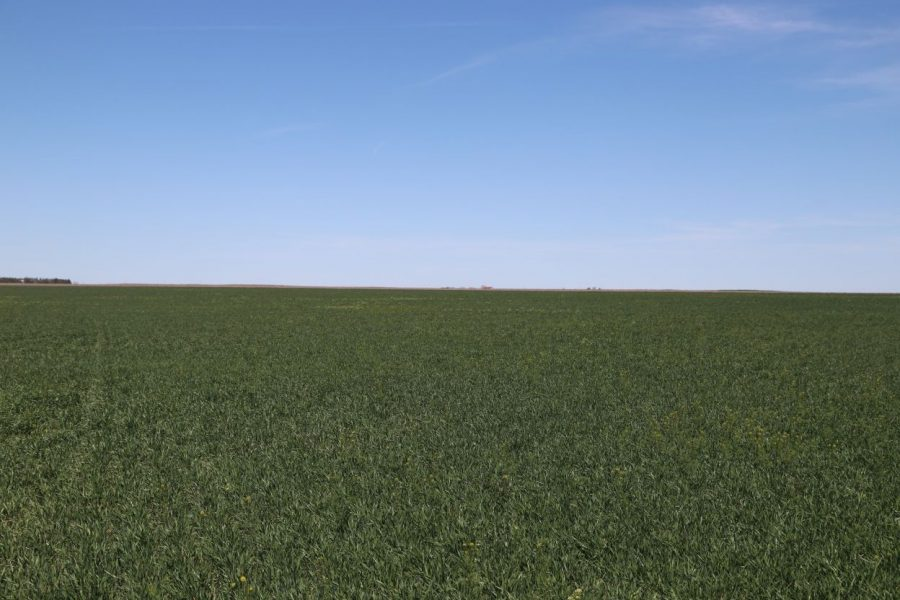 Feature picture Parcel #3B - growing wheat crop