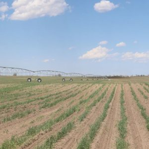 Parcel 3 - View from SW to NE with Zimmatic pivot