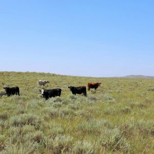 Pasture view with cattle