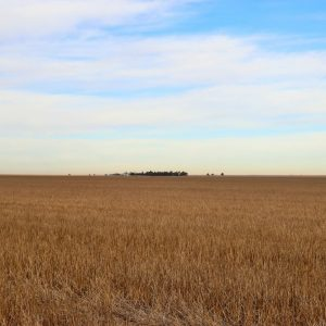 Wheat stubble from SW to NE
