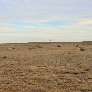 Pasture Land in Yuma County Colorado for Sale