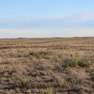 Pasture with slightly rolling terrain
