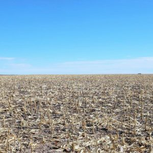 Parcel #4 Corn stalks on north pivot, farmed dryland as they were paid not to irrigated