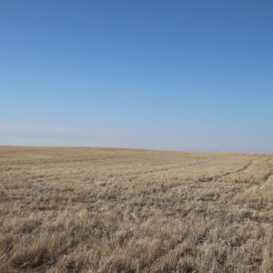 Dry cropland with undulating to gently rolling terrain