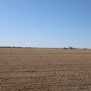 North pivot - view of field to south