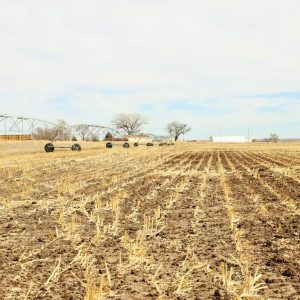 Parcel #4 - View of 7 tower Zimmatic pivot