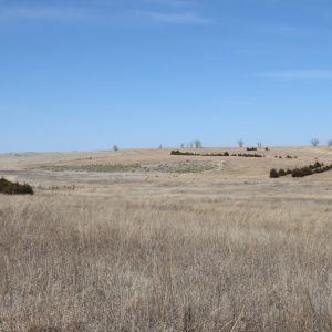 #2 View of CRP with mature windbreaks