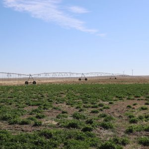 East Pivot - View from W to NE