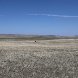 North view of pasture