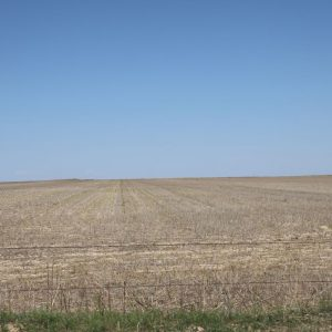 North dryland planted to corn
