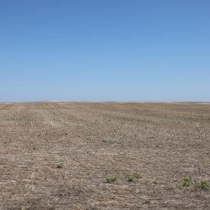 Area to be planted to cover crop then grass for CRP