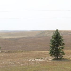 Parcel #10 - View from west side of residence to the west, windbreak, and expired CRP