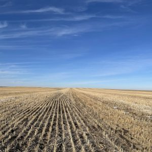 Parcel #3 - View of millet stubble from south to north