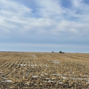 Parcel #4 - View of dryland from east to west of corn field