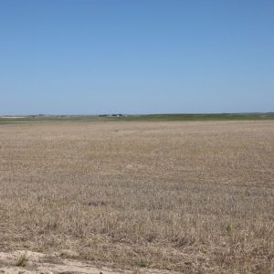 Newly enrolled CRP to be seeded to grass