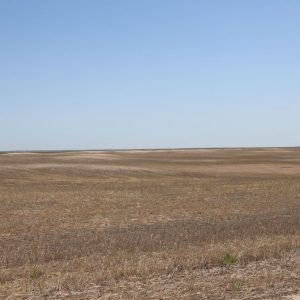 dryland to be planted to CRP