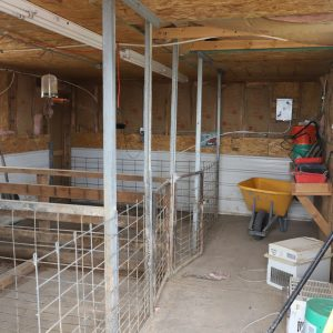 Insulated shed for livestock