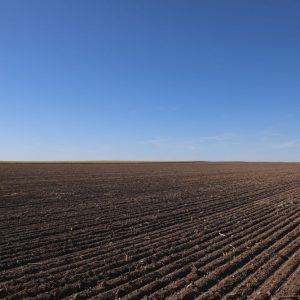 Parcel #2 - View from East side to NW of recently planted wheat