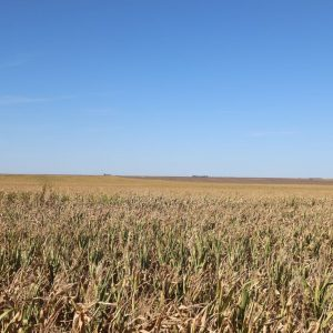 Parcel #2 - View of dryland corn to the N