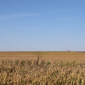 Parcel #2 - View to the N of dryland corn