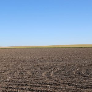 Parcel #3 - Recently planted wheat