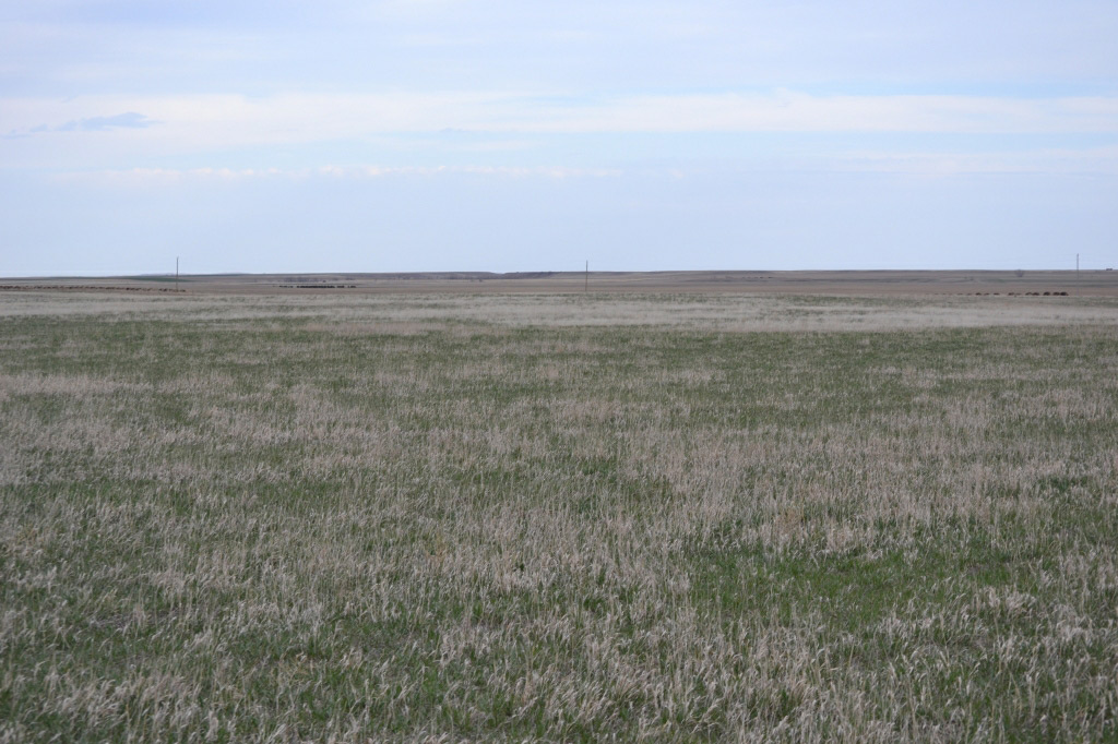 pasture, dryland, logan county, colorado, farmland,