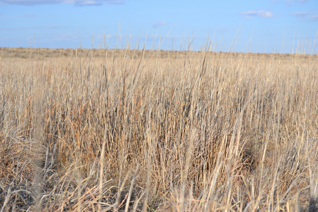 Nebraska hunting and CRP pasture land for sale