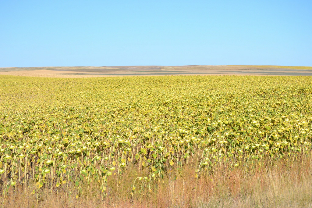 Nebraska dryland for sale by Reck Agri Realty and Auction