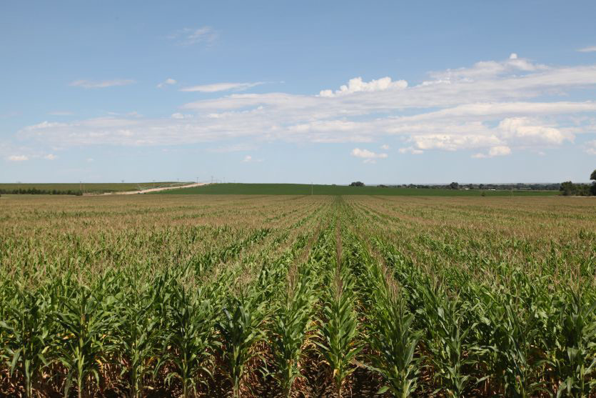 Reck Agri Realty Colorado Farm Land for Sale