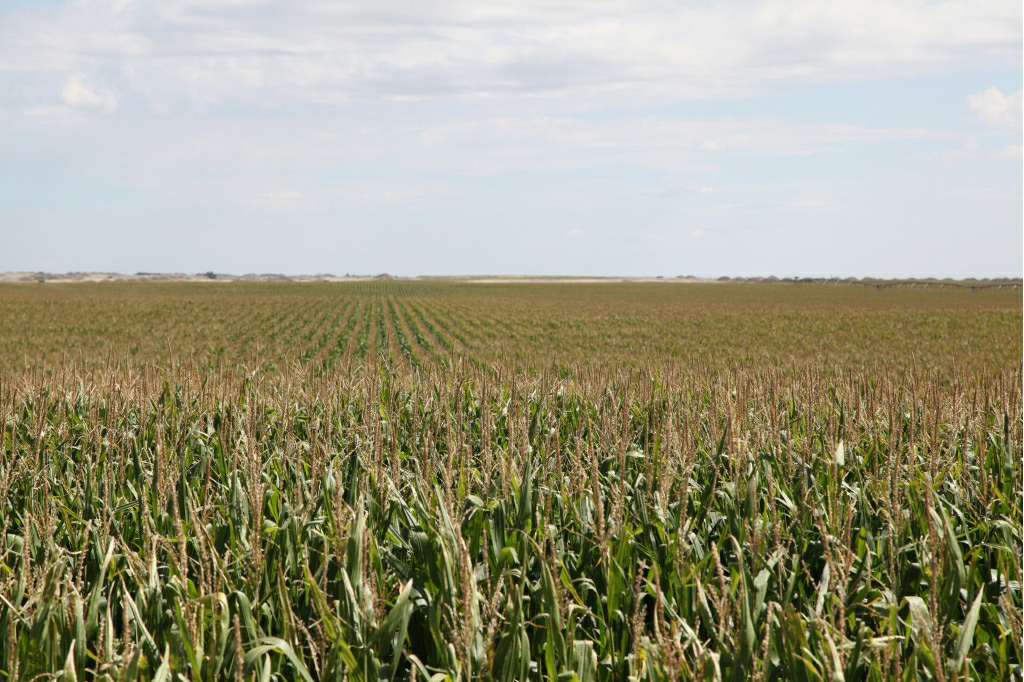 irrigated farmland in Nebraska, land for sale, Absolute land auction