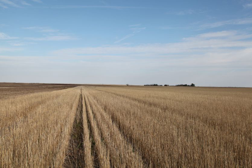 Reck Agri Realty Colorado Farm Land for Sale, dryland farm for sale