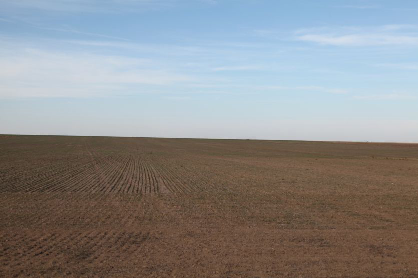 Sedgwick county Colorado farmland for sale, land, row crop, wheat, corn