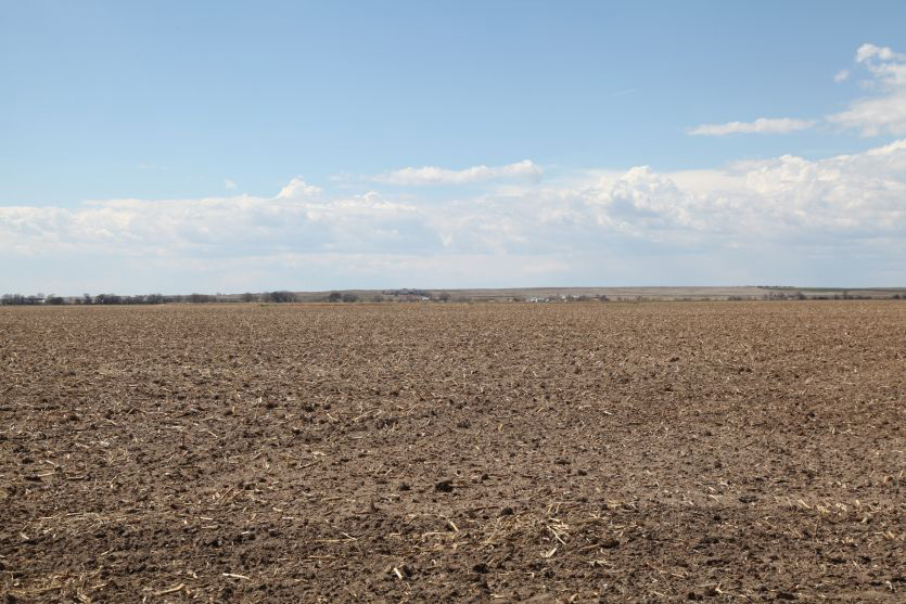Sedgwick County Irrigated & Pasture Flood Irrigated & Pasture For Sale